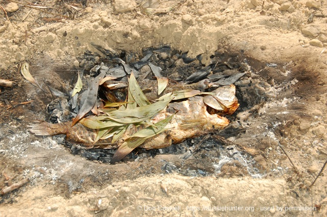 bush tucker fish steamed ground oven