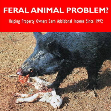 Contact IHP for Feral Animal Problems