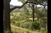 Barraba #1 NSW Hunting Property