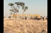 tambo-2-qld-ihp-hunting-property-44