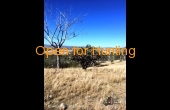 Stanthorpe #1 QLD Hunting Property