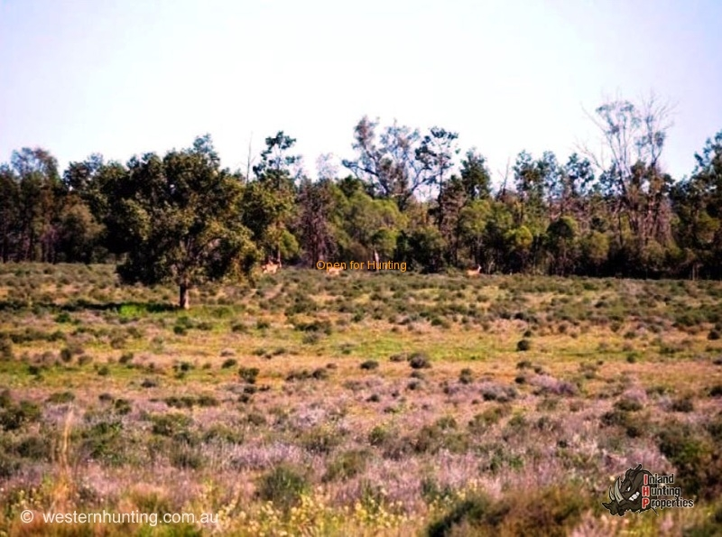 Paid Hunting Properties Nsw