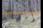 Burrowye #1 VIC Hunting Property