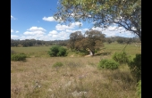 Molong #2 NSW Hunting Property