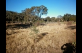 Dunedoo #1 NSW Hunting Property