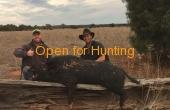 Hermidale #1 NSW Hunting Property