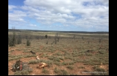 Glenmorgan #5 QLD Hunting Property
