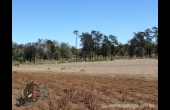 Glenmorgan #3 QLD Hunting Property