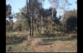 Meandarra #1 QLD Hunting Property