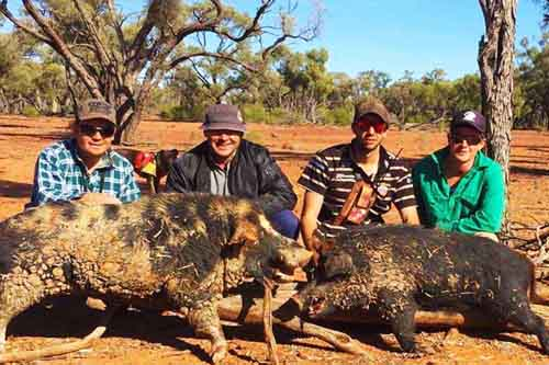 Pig Hunting with Dogs in Australia