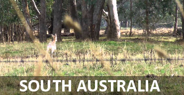 South Australia Hunting Properties