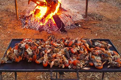 Cooking Yabbies on the Fire
